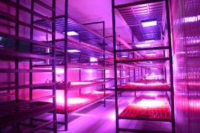 Indoor Tarım Sistemleri ve Üretim Danışmanlığı