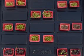 Mikro Filiz Üretimi